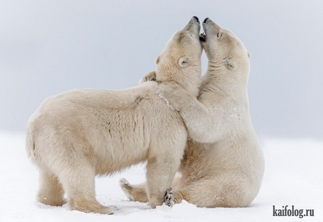 Прикольные животные (50 фото)