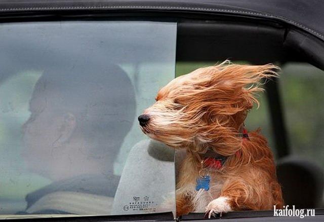 Скоростные собаки (35 фото)