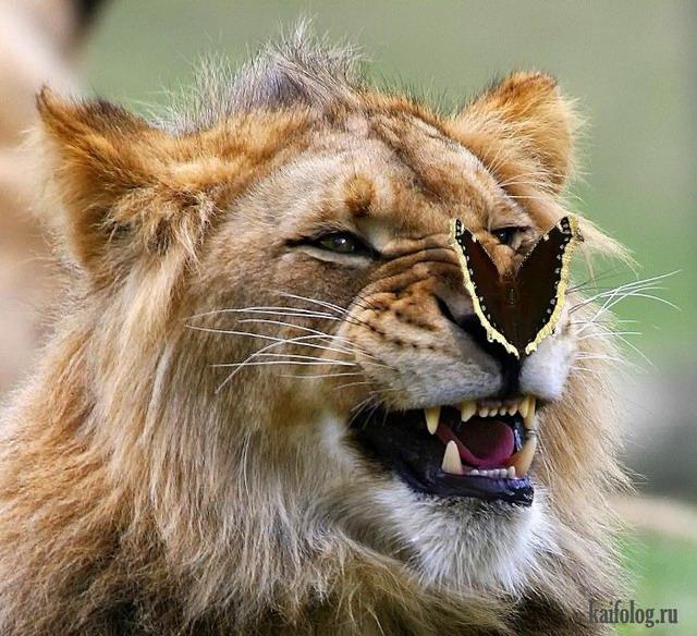 Позитивные фото зверей (55 фото)