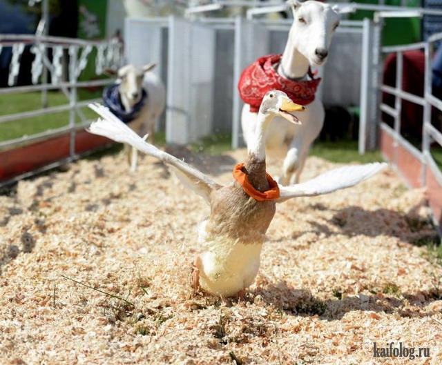 Смешные животные и птицы (50 фото)