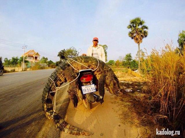Байкеры и мотоциклисты (55 фото)