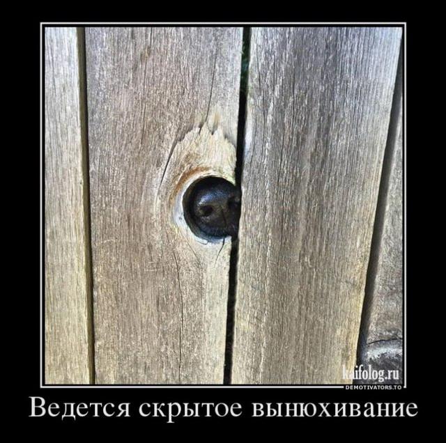 Классные демотиваторы - 272 (45 картинок)