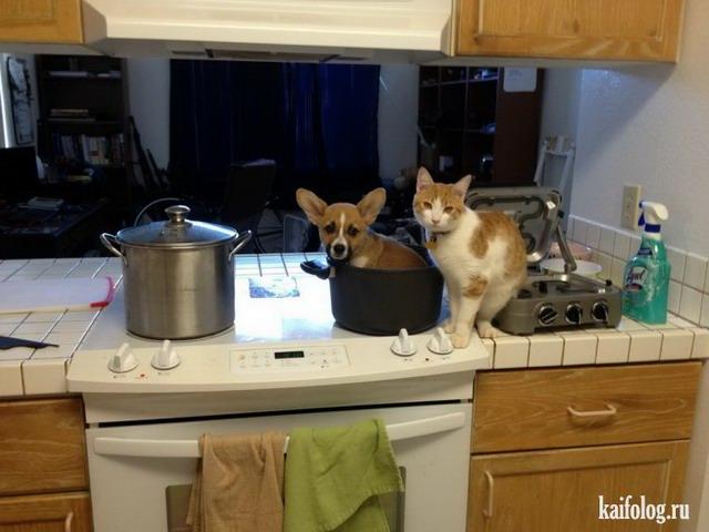 Котики (55 фото)