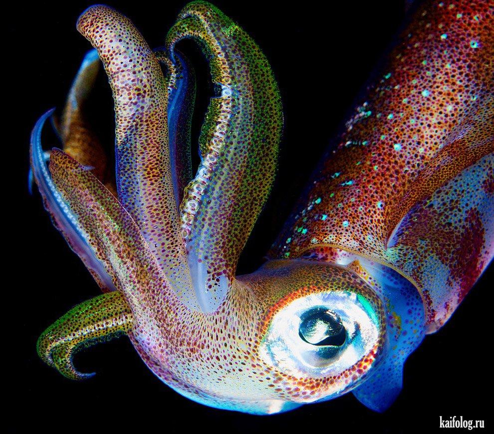 Морские животные (40 фото): http://kaifolog.ru/pozitiv/6300-morskie-zhivotnye-40-foto.html