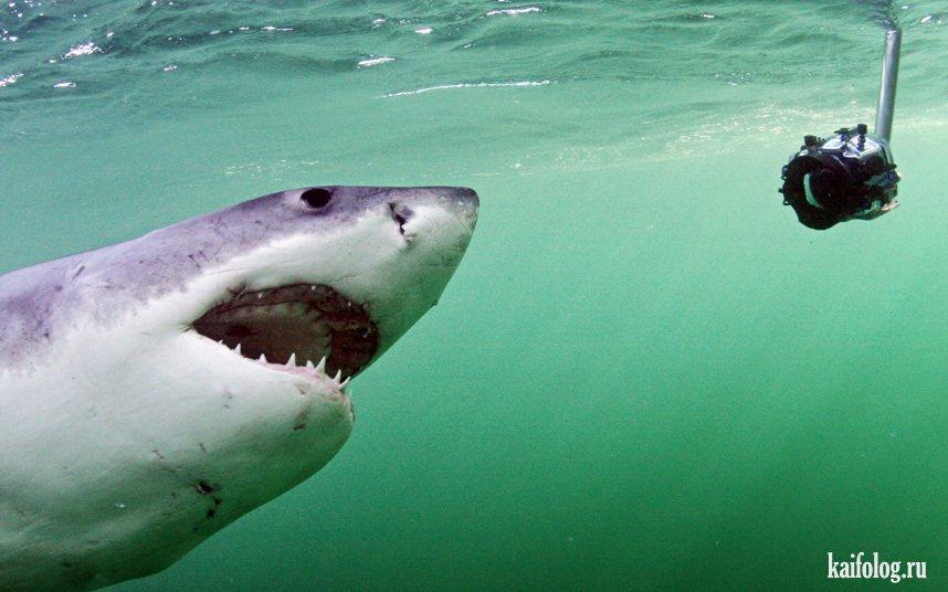 Морские животные 40 фото
