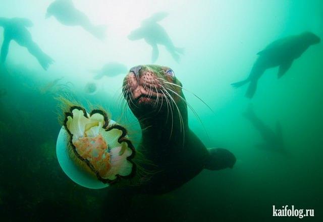 Морские животные (40 фото)