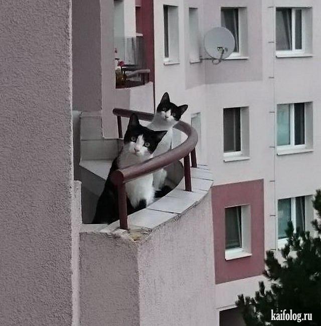 Приколы про соседей (40 фото)