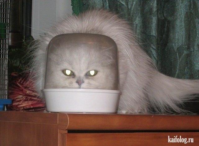 Злые коты (35 фото)