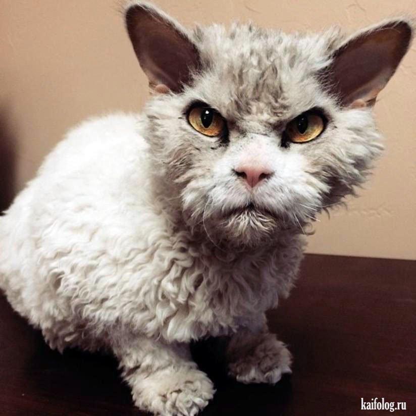 Рисунки злых котов