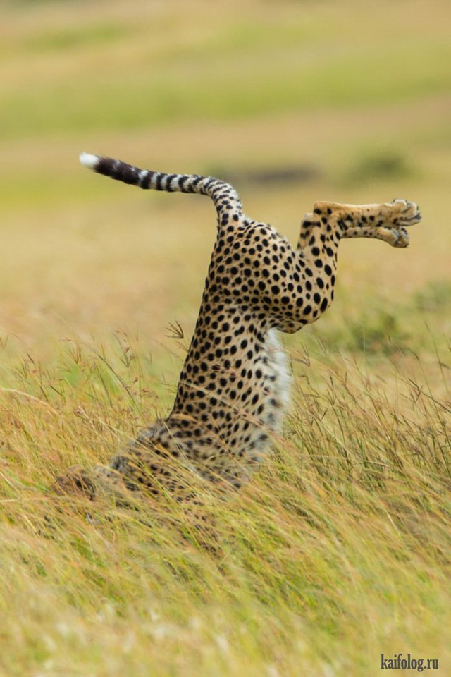 Comedy Wildlife Photography Awards 2015 (40 фото)