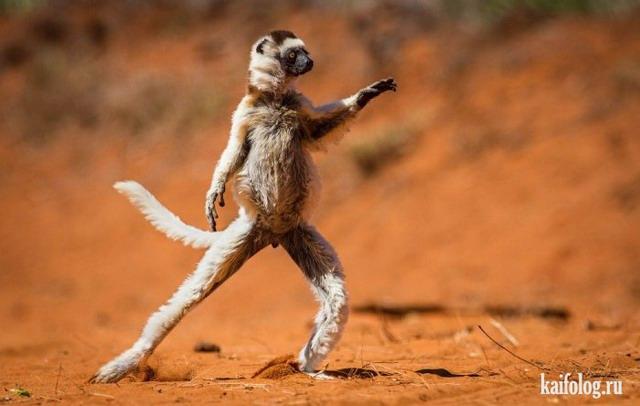 Comedy Wildlife Photography Awards 2015 (40 фото)
