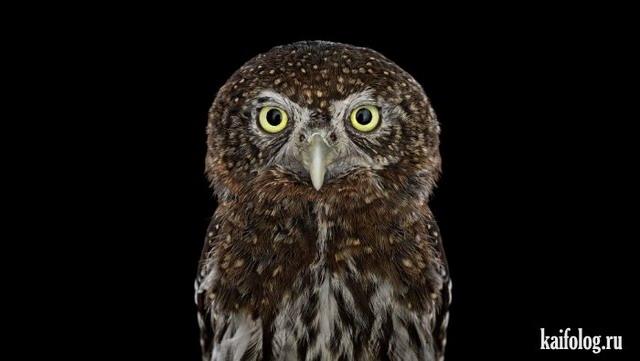 Портреты животных и птиц (45 фото)