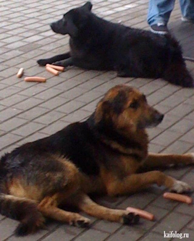 Наглые собаки (40 фото)