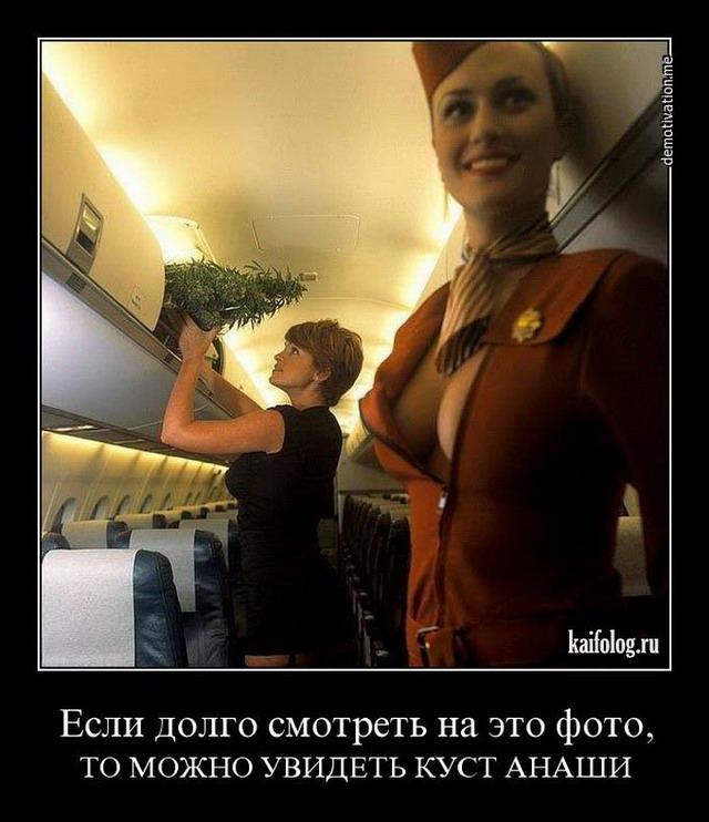 Демотиваторы про стюардессу