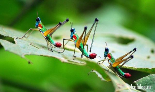 Прикольные и жуткие насекомые (45 фото)