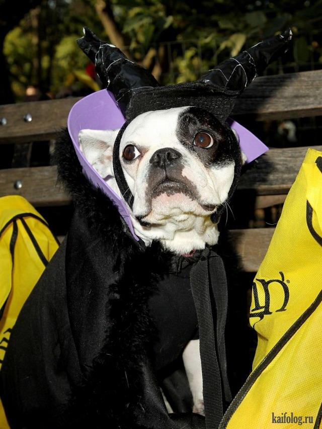 Собачьи костюмы (40 фото)