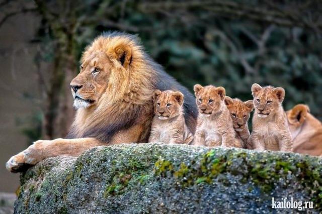 Мир животных (40 фото)