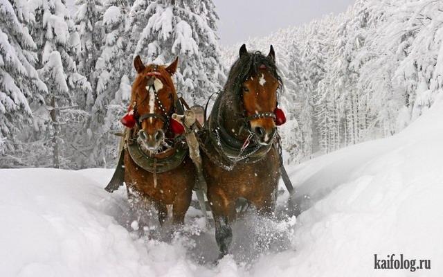 Красивая зима (60 фото)