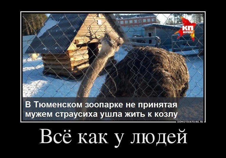 каждый народ, демотиваторы смешные свежие по русский миске