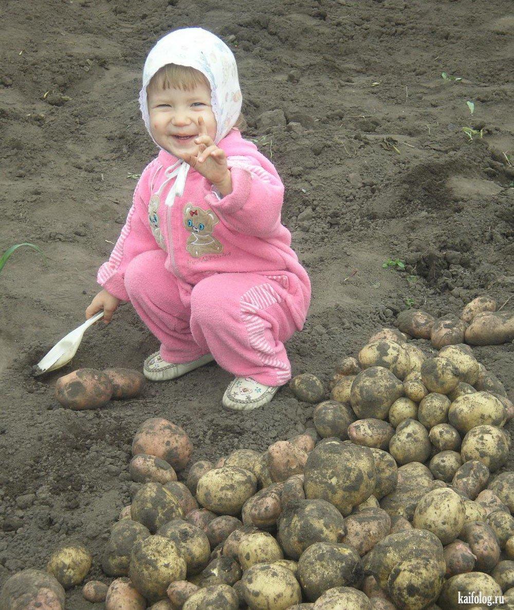 Здорово бабуля картошку сажаю 463