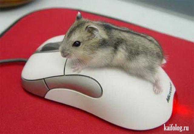 День рождения компьютерной мыши (35 фото)