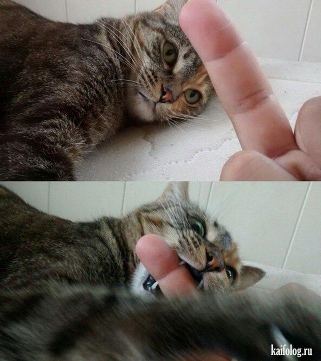 Кошки года (65 фото)