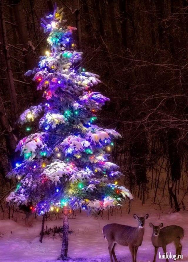 те, фото елки настоящей новогодней всего