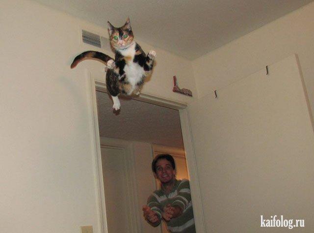 Коте хорошо зацепился