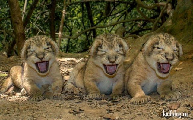 Животные тоже улыбаются (45 фото)