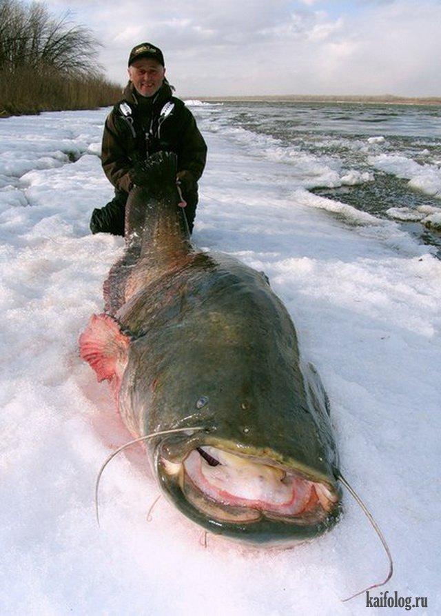 Зимняя рыбалка (45 фото)