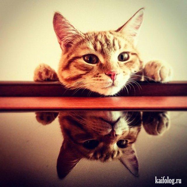 День кошек (40 фото)