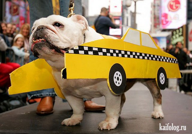 прикольные картинки про такси