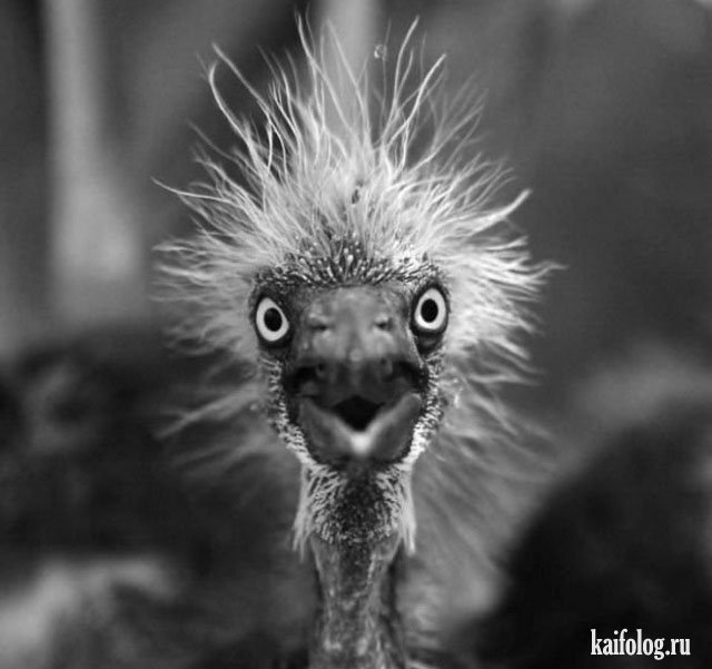 Очень удивлённые животные (40 фото)