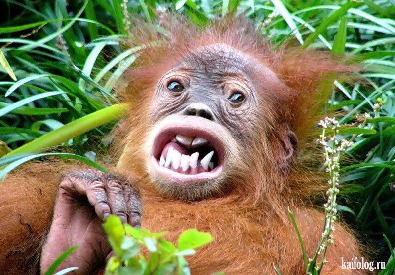 Картинки по запросу Фотографии удивленных животных