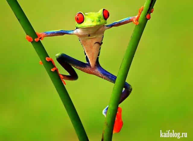 Лягушки (45 фото)