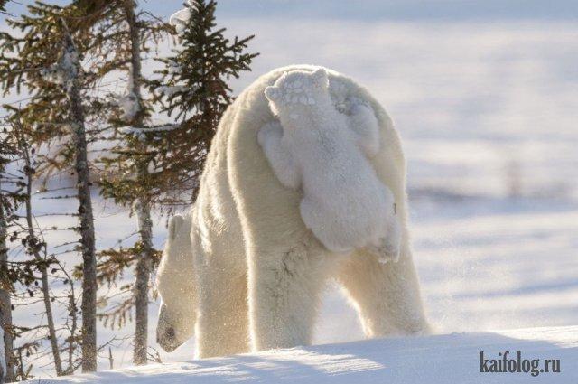 Фото приколы про животных (40 фото)