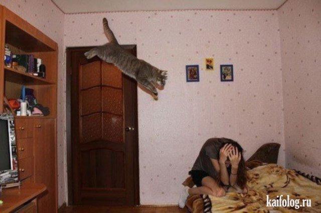 Коты и кошки (40 фото)