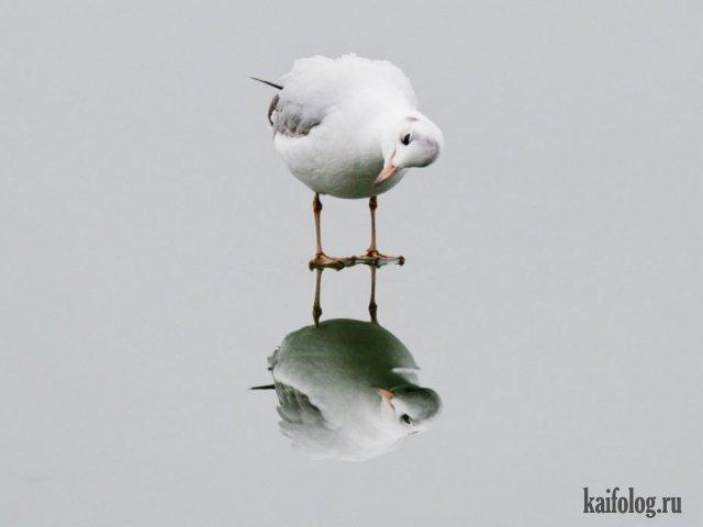 Мир без фотошопа (45 фото)