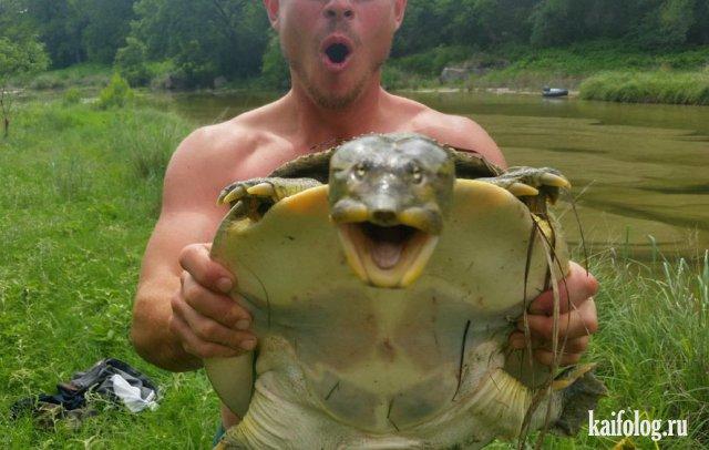 Фото черепах в День Черепахи (40 штук)