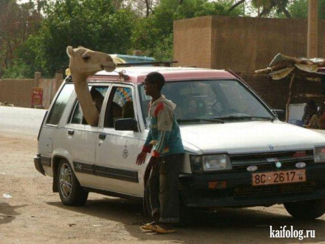 Приколы из Африки (40 фото)