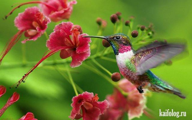 Красота спасет мир (50 фото)