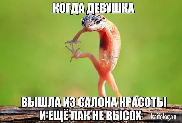 http://kaifolog.ru/uploads/posts/2016-08/1470283727_001_4.jpg