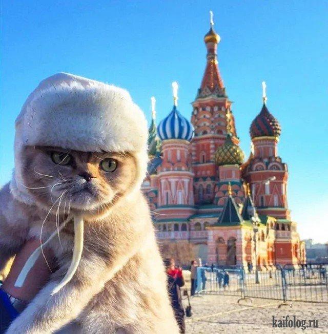 Русские приколы про животных (45 фото)