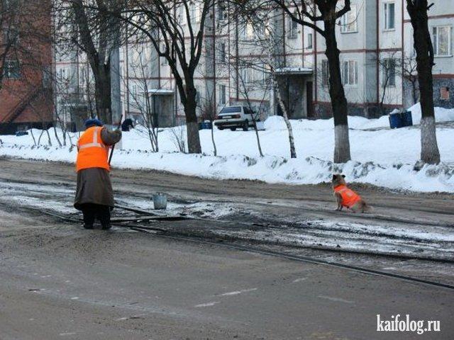 Приколы и маразмы России (65 фото)