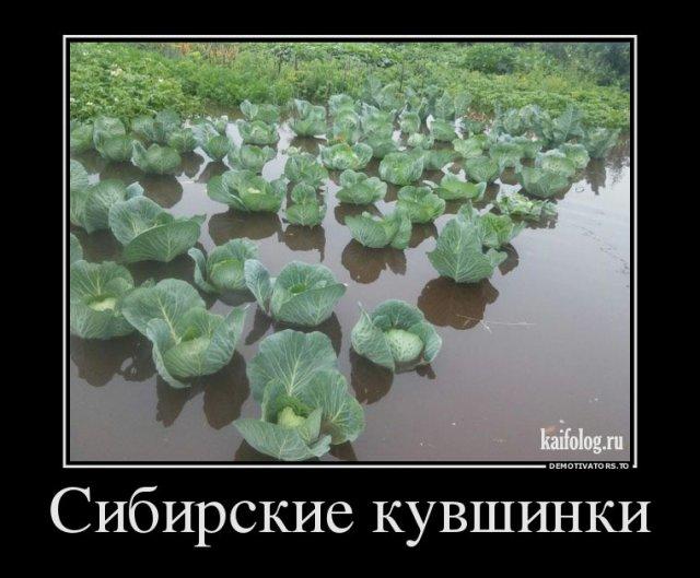 Русские демки - 292 (45 фото)