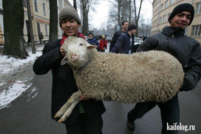 Это Кавказ, детка! (45 фото)