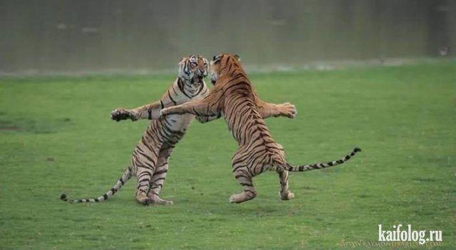 Позитивные животные (40 фото)