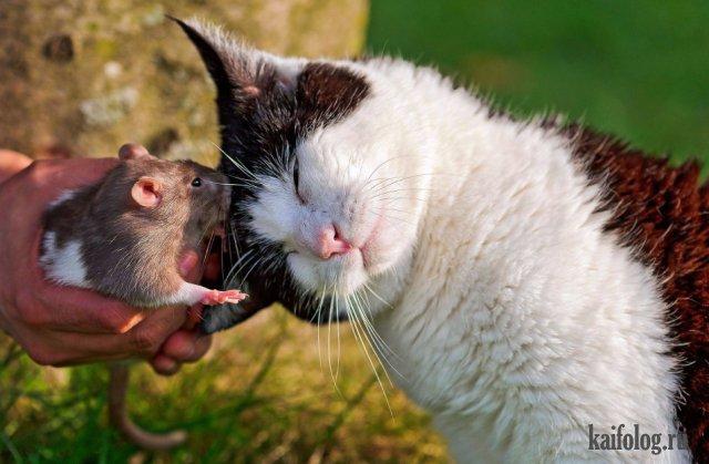 Прикольные и позитивные животные (40 фото)
