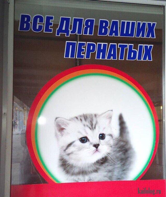 Русские приколы и маразмы (60 фото)