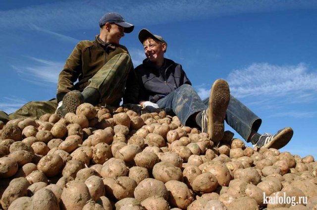 Картофельфест открыт (50 фото)